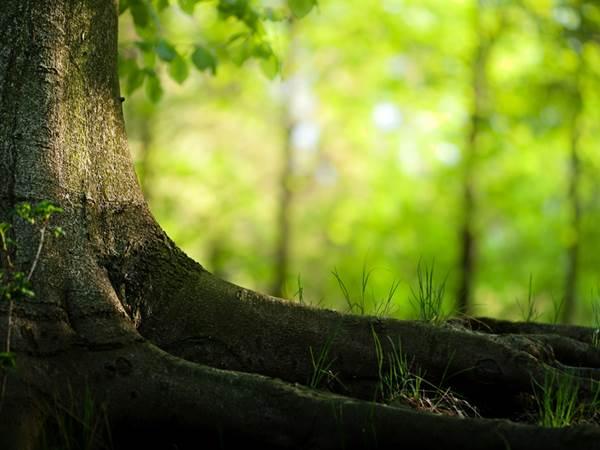 Kelompok Pecinta Alam Pegiat Lingkungan Hidup